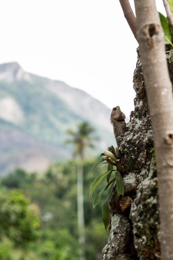 glenrock_retreat_srilanka-11